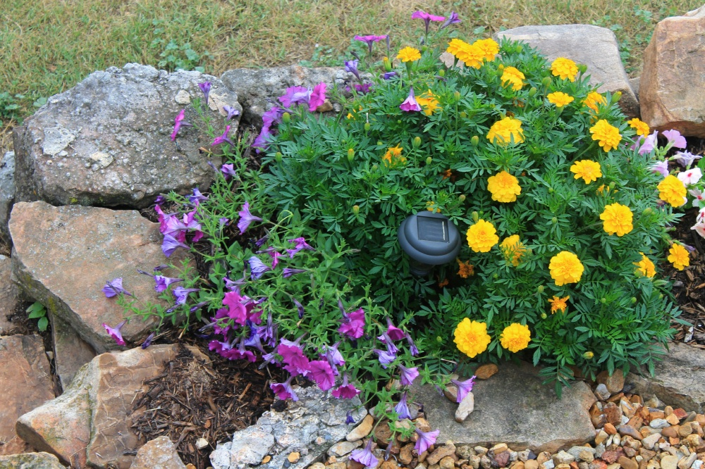 More Flowers By The Deck